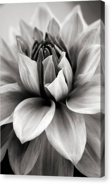 White Flower Canvas Print - Black And White Dahlia by Danielle Miller