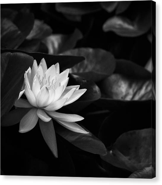 Black And White Flower Nine Canvas Print
