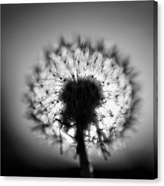 Black And White Flower Ten Canvas Print