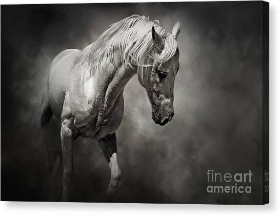Black And White Horse - Equestrian Art Poster Canvas Print