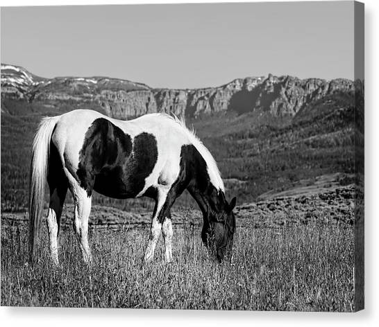 Black And White Horse Grazing In Wyoming In Black And White  Canvas Print