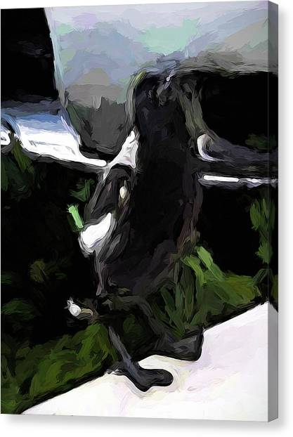 Black And White Magpie On The Porch Canvas Print
