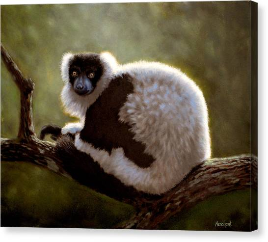 Black And White Ruffed Lemur Canvas Print