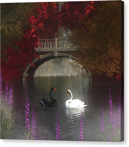 Black And White Swans Canvas Print