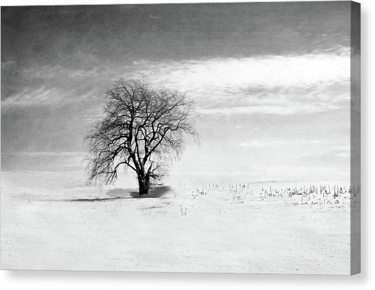 Black And White Tree In Winter Canvas Print