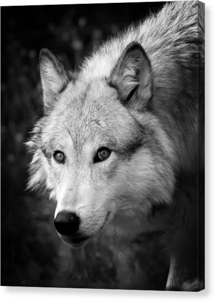 Canvas Print - Black And White Wolf by Steve McKinzie