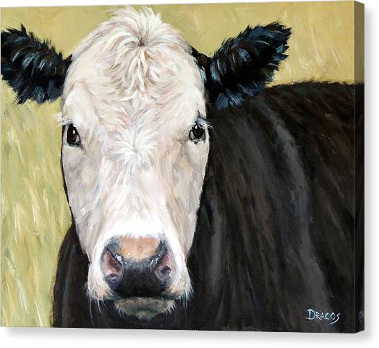 Angus Steer Canvas Print - Black Angus Cow Steer White Face by Dottie Dracos