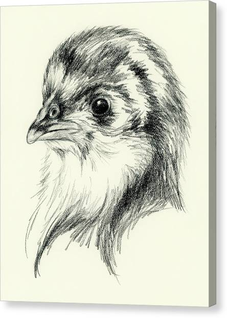 Black Australorp Chick In Charcoal Canvas Print