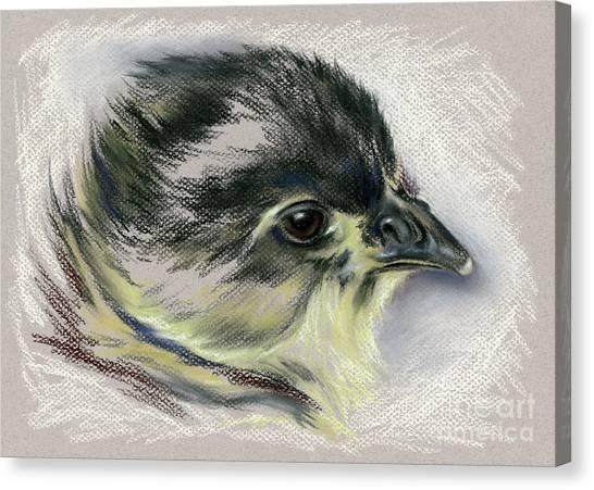 Black Australorp Chick Portrait Canvas Print