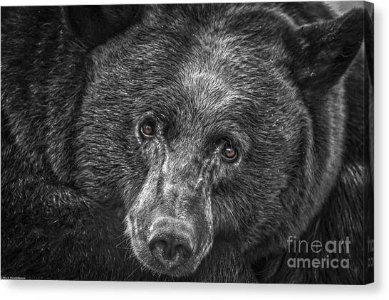 Black Bear Portrait 3 Canvas Print