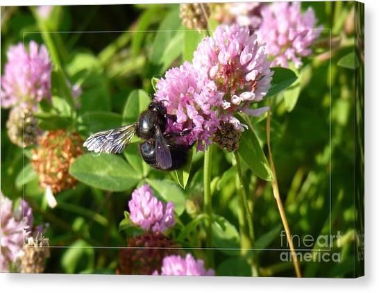 Black Bee On Small Purple Flower Canvas Print
