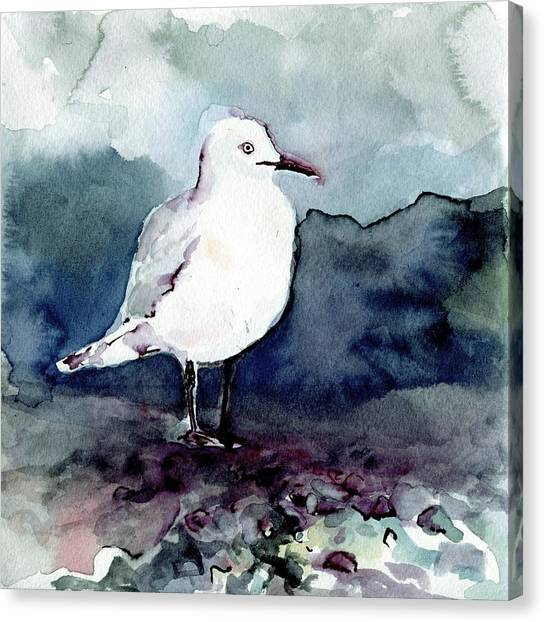Black-billed Gull Canvas Print