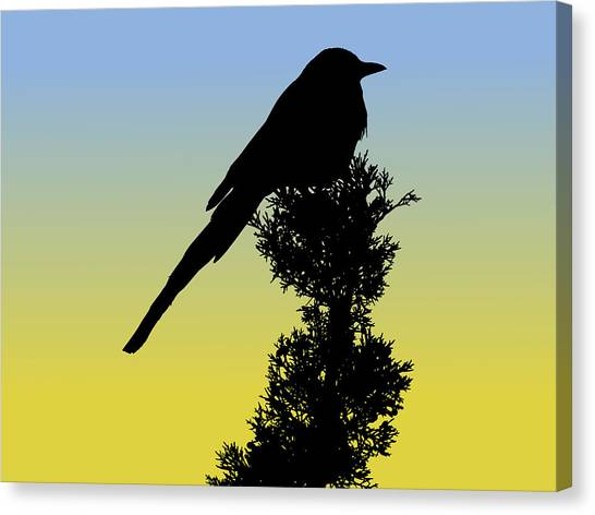 Black-billed Magpie Silhouette At Sunrise Canvas Print