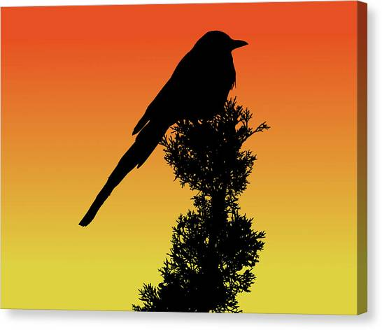 Black-billed Magpie Silhouette At Sunset Canvas Print