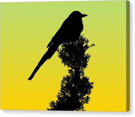 Black-billed Magpie Silhouette - Special Request Background Canvas Print