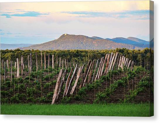 Black Birch Vineyard And Summit House View Canvas Print