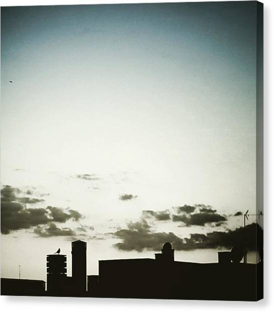 Skylines Canvas Print - Black Bird by Rafa Rivas
