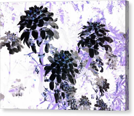 Canvas Print - Black Blooms I I by Orphelia Aristal
