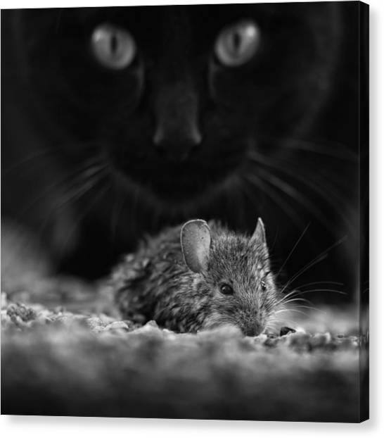 Mice Canvas Print - Black Breakfast by Francois Casanova