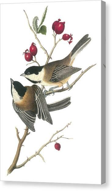 Black-capped Chickadee Canvas Print by John James Audubon