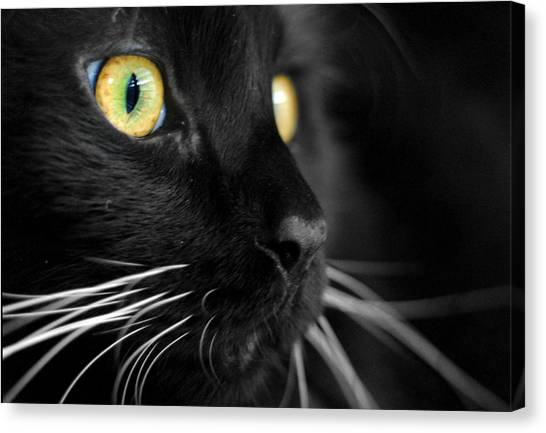Black Cat 2 Canvas Print