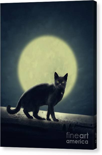 Black Cat And Full Moon Canvas Print
