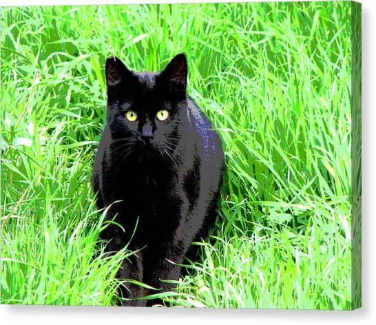 Black Cat In A Green Field Canvas Print
