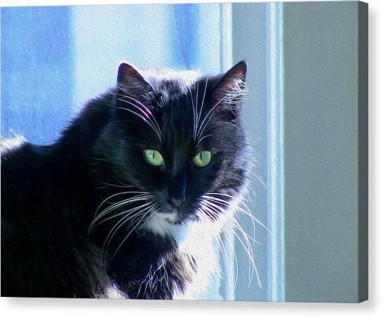 Black Cat In Sun Canvas Print