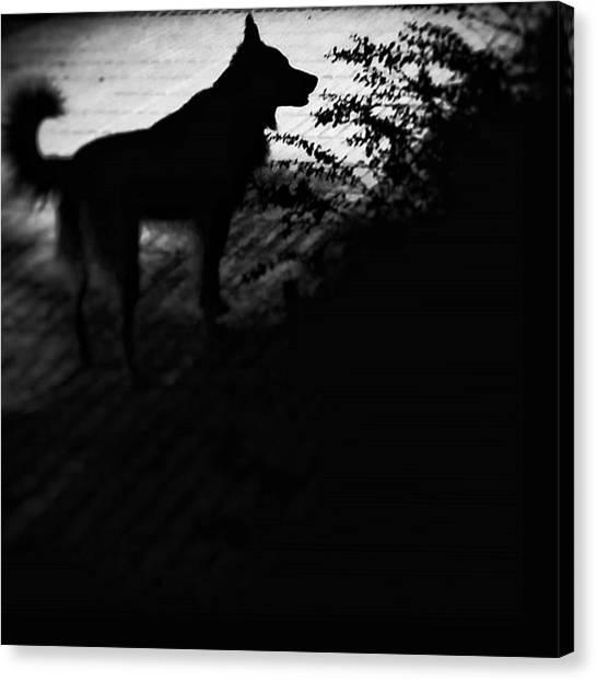 Pets Canvas Print - Black Chuvak #dogs #dogsofinstagram by Rafa Rivas