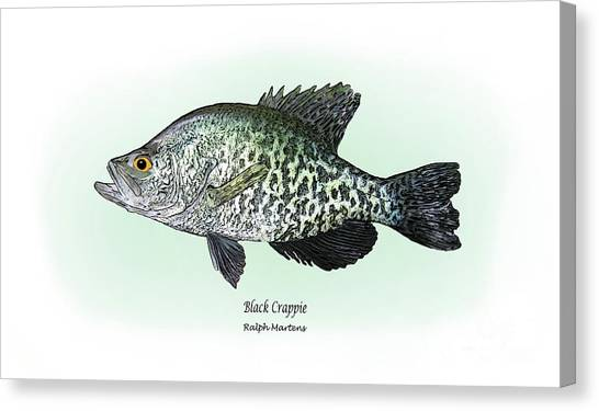 Angling Art Canvas Print - Black Crappie by Ralph Martens