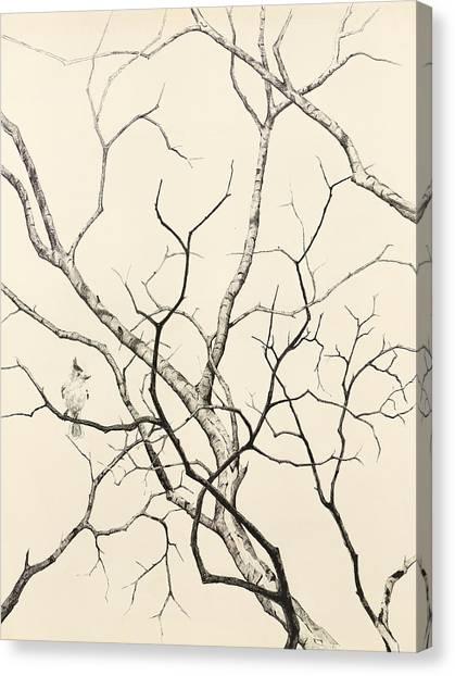 Black Crested Titmouse Canvas Print by Paul Illian