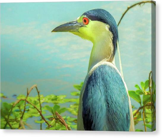 Black-crowned Night Heron Digital Art Canvas Print