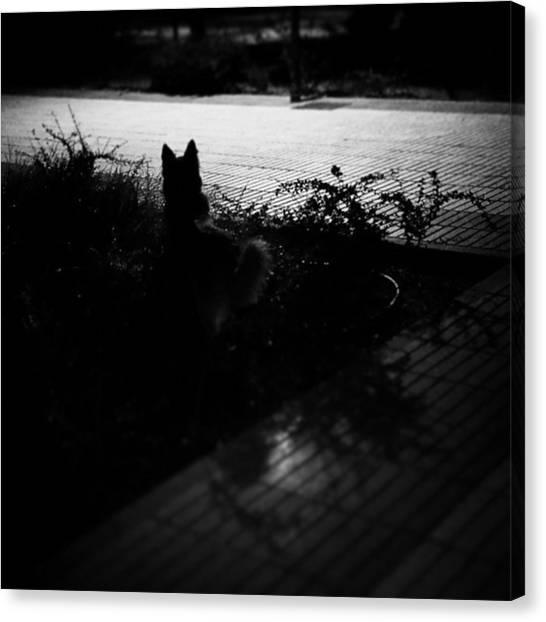 Head Canvas Print - Black Dog  #dog #animal #pet #portrait by Rafa Rivas