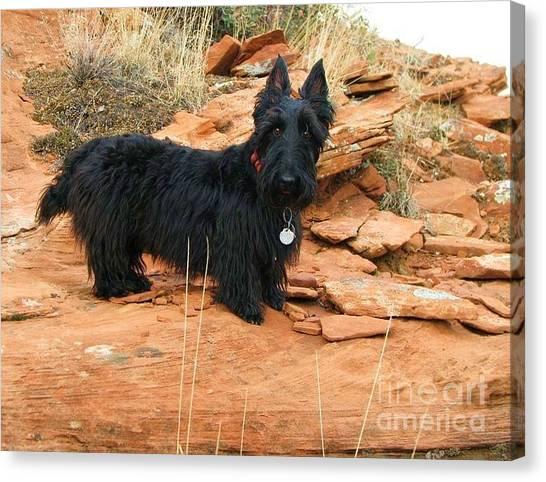 Black Dog Red Rock Canvas Print