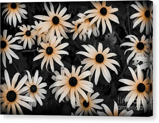 Canvas Print featuring the photograph Black Eyed Susan by Elena Elisseeva