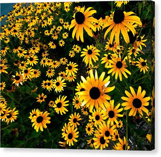Black-eyed Susan Flowers Canvas Print