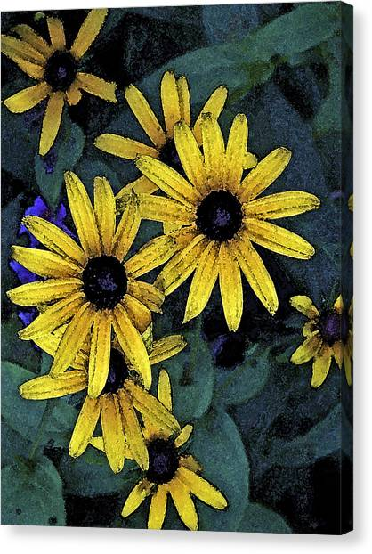 Black-eyed Susans Canvas Print by Debra Wilkinson