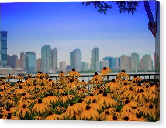 Black Eyed Susans In Battery Park Canvas Print