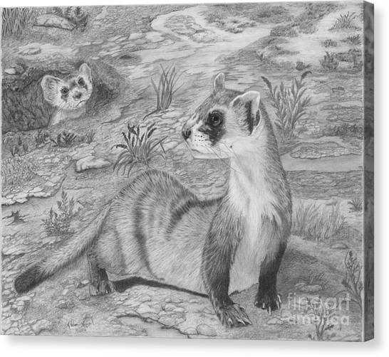 Black-footed Ferret Canvas Print - Black Footed Ferrets by Cathleen Lengyel