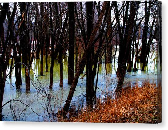 Black  Forest - Image 4605 Canvas Print