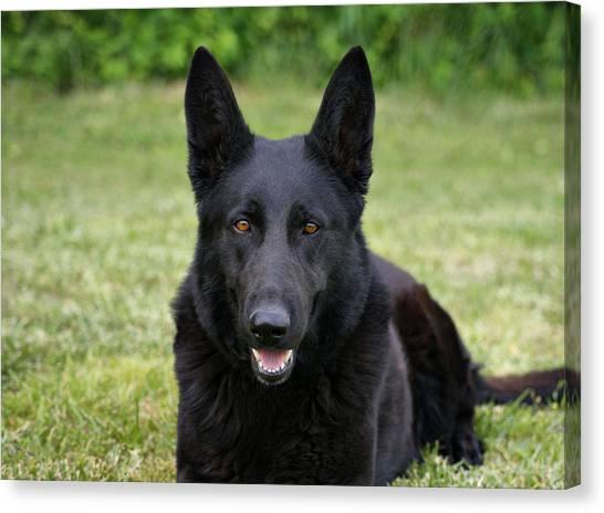 Black German Shepherd Dog II Canvas Print