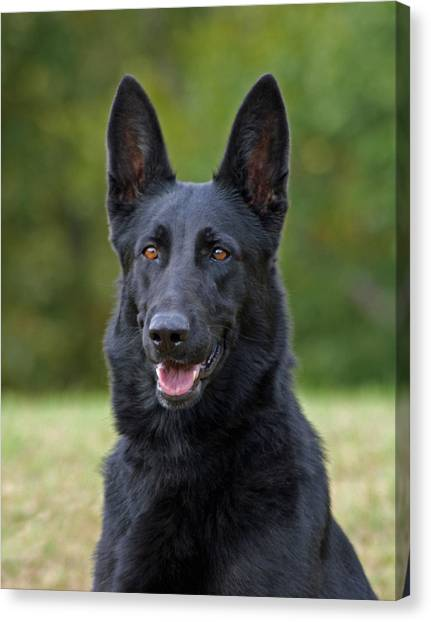 German Shepherds Canvas Print - Black German Shepherd Dog by Sandy Keeton