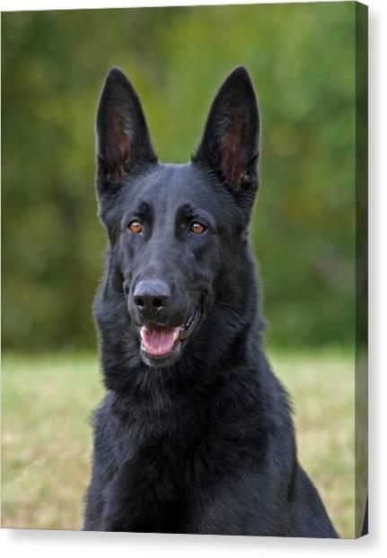 Black German Shepherd Dog Canvas Print
