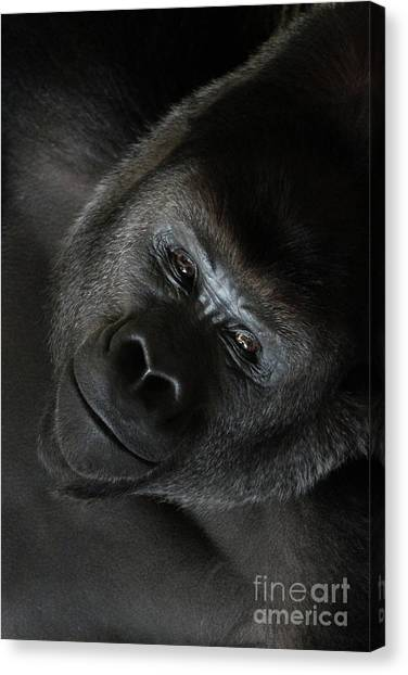 Black Gorilla Smile Canvas Print