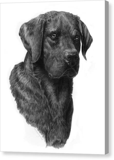 Black Lab Head Study 2 Canvas Print