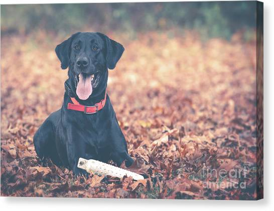 Black Labrador In The Fall Leaves Canvas Print