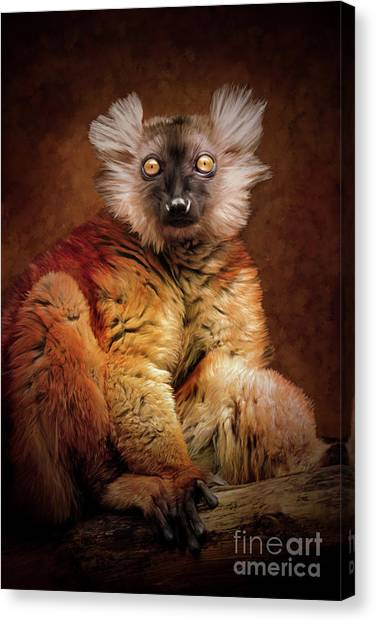 Black Lemur Canvas Print