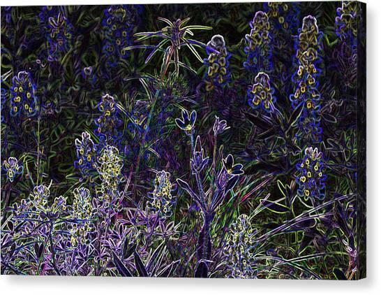 Black Light Wildflowers Canvas Print by Linda Phelps