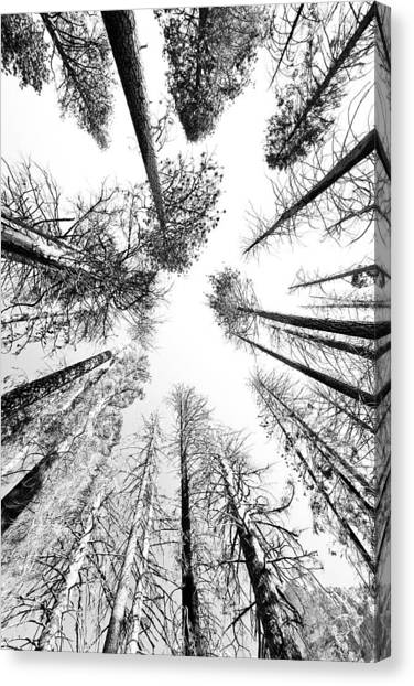 Black N White Sky-trees Canvas Print by Rick Pham