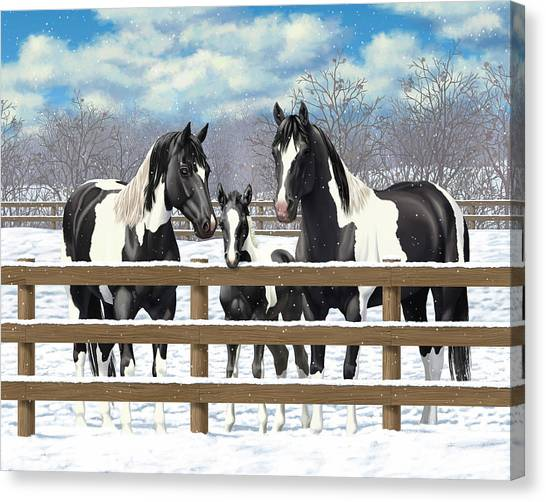 Black Paint Horses In Snow Canvas Print by Crista Forest